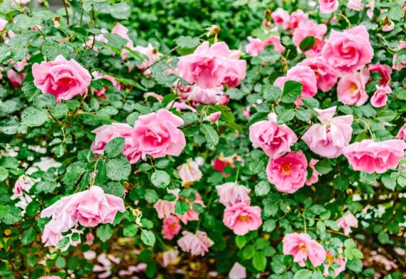 www.kellydillonphoto.com8.jpg